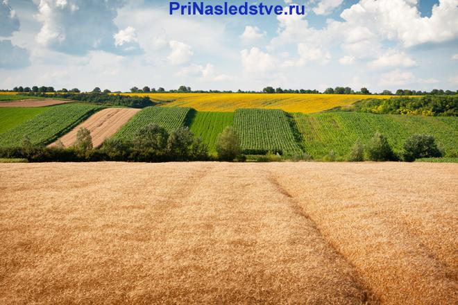 Сельскохозяйственные поля